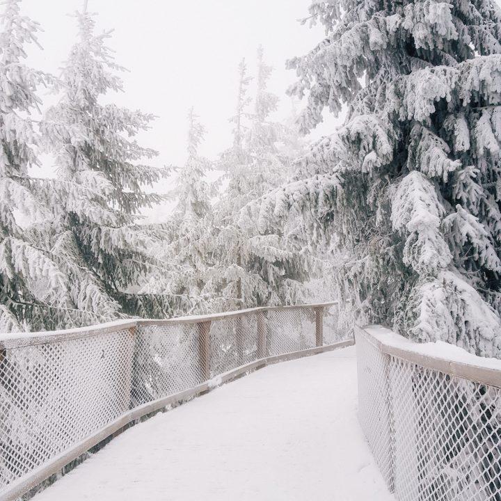 W odwiedzinach u Pani Zimy